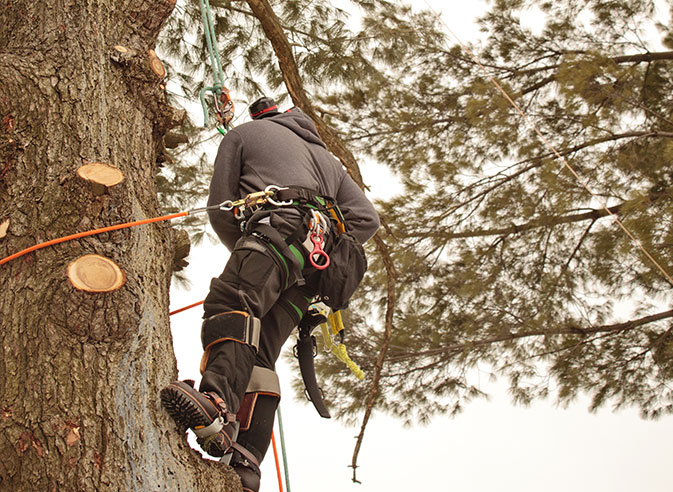 Estes Valley Tree Care LLC employee trimming a tree
