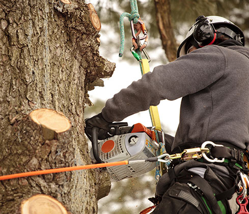 Estes Valley Tree Care LLC employee cutting a tree down