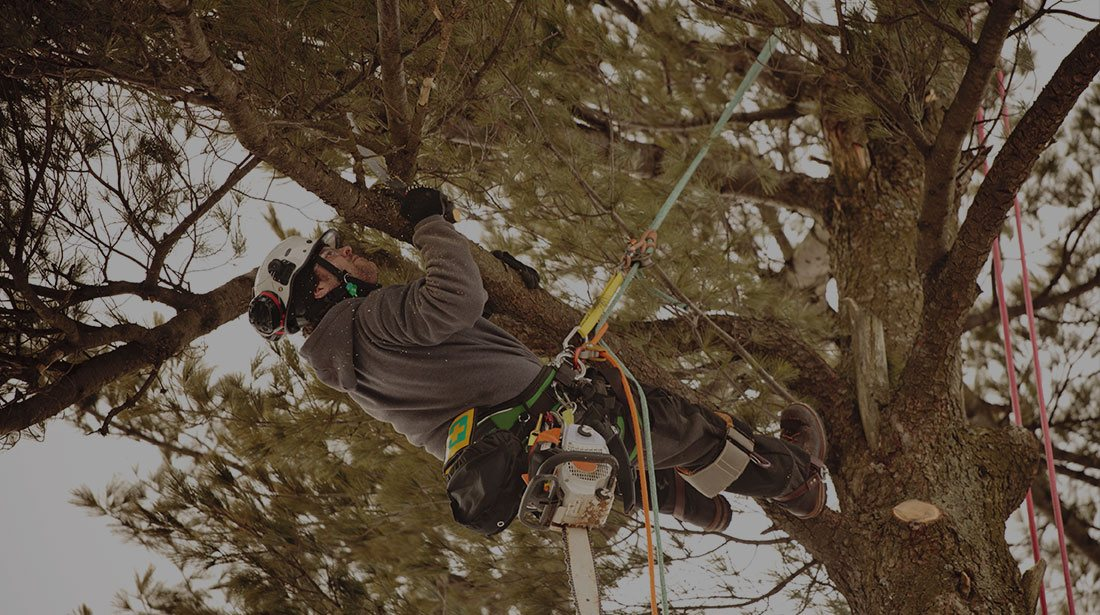 Estes Valley Tree Care LLC: Emergency tree removal in Loveland and Estes Park