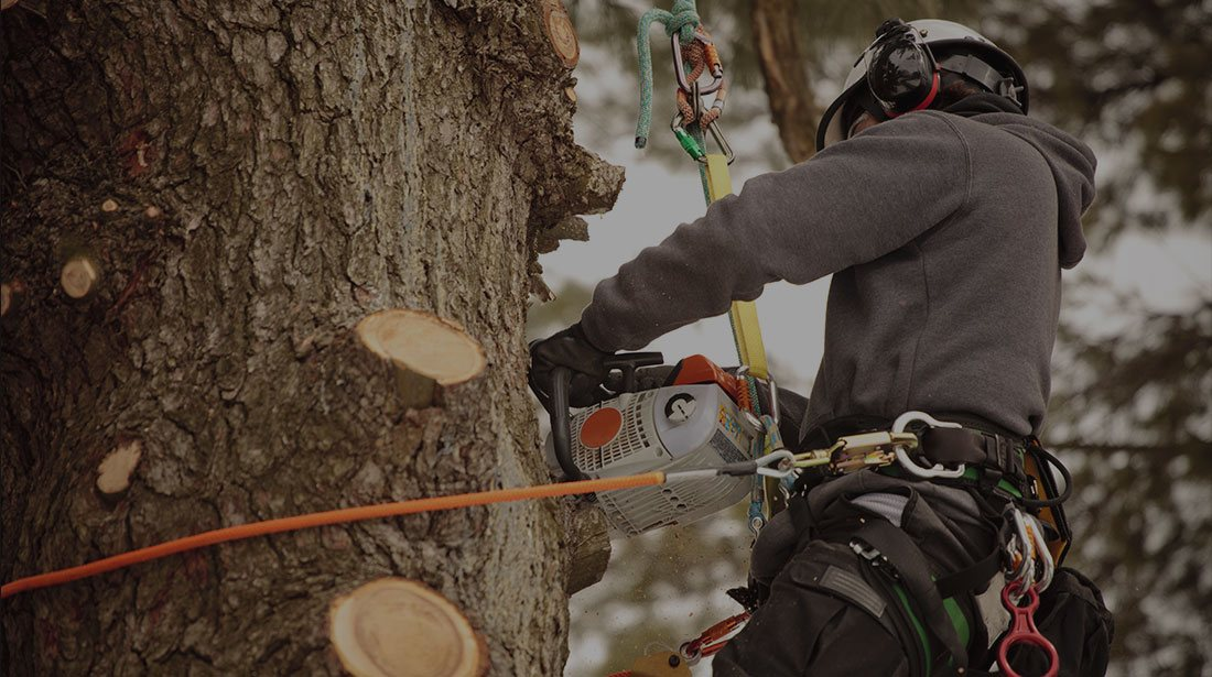 Estes Valley Tree Care LLC: Stump and tree removal in Loveland and Estes Park