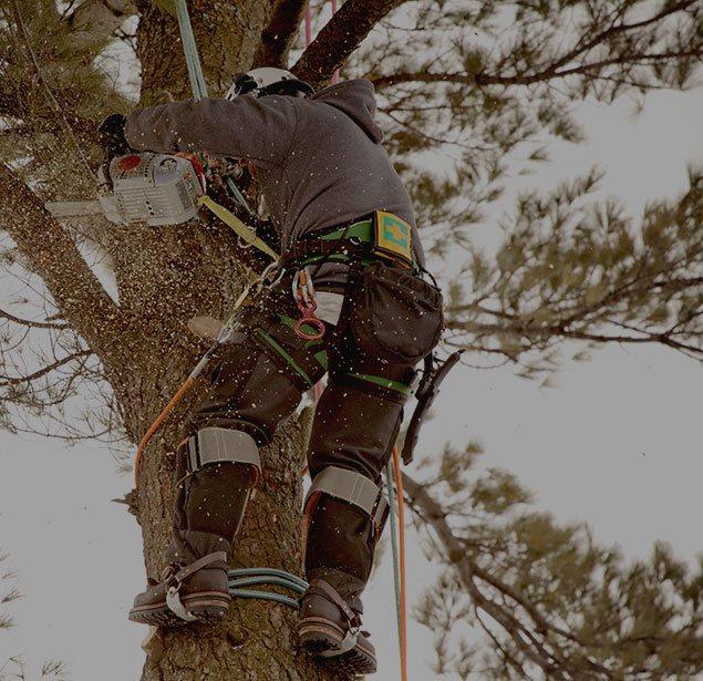 Estes Valley Tree Care LLC: Tree health in Loveland and Estes Park