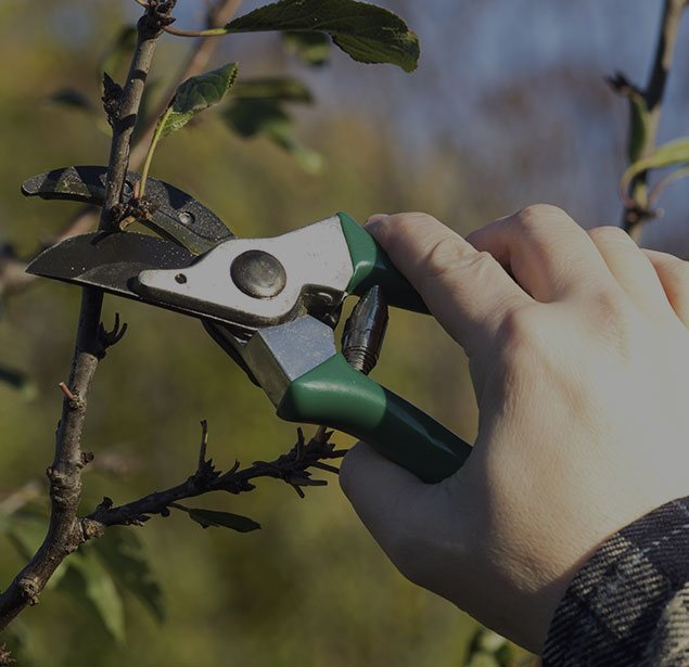 Estes Valley Tree Care LLC: Tree pruning in Loveland and Estes Park